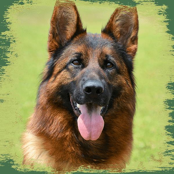 TeMar Female Dogs